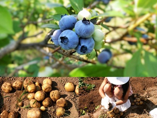 夏の収穫体験プラン